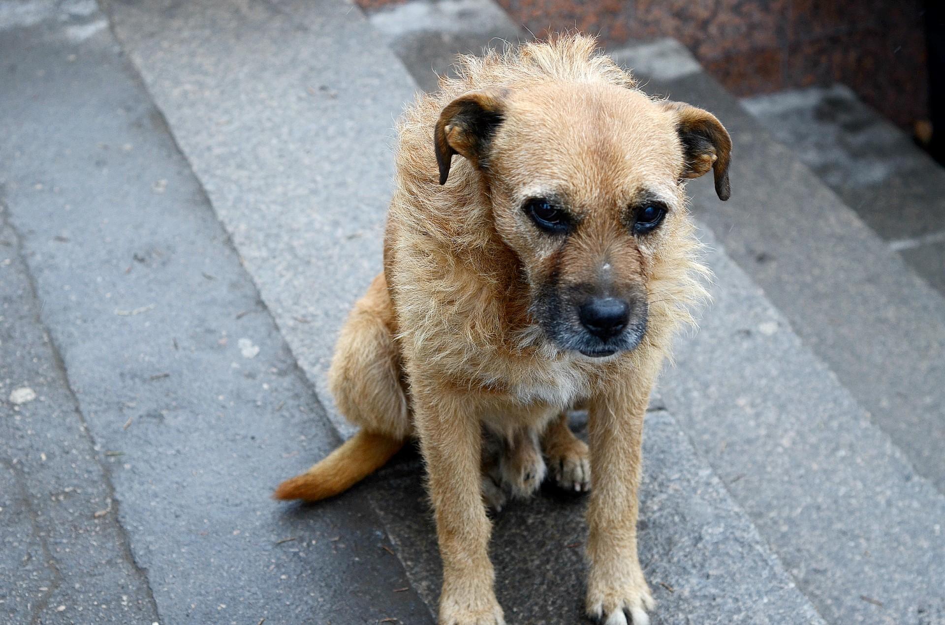 удобно, картинки ждущих собак потолочную