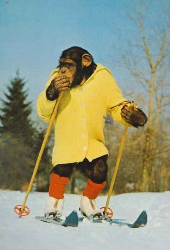 Прикольные картинки лыжники, как
