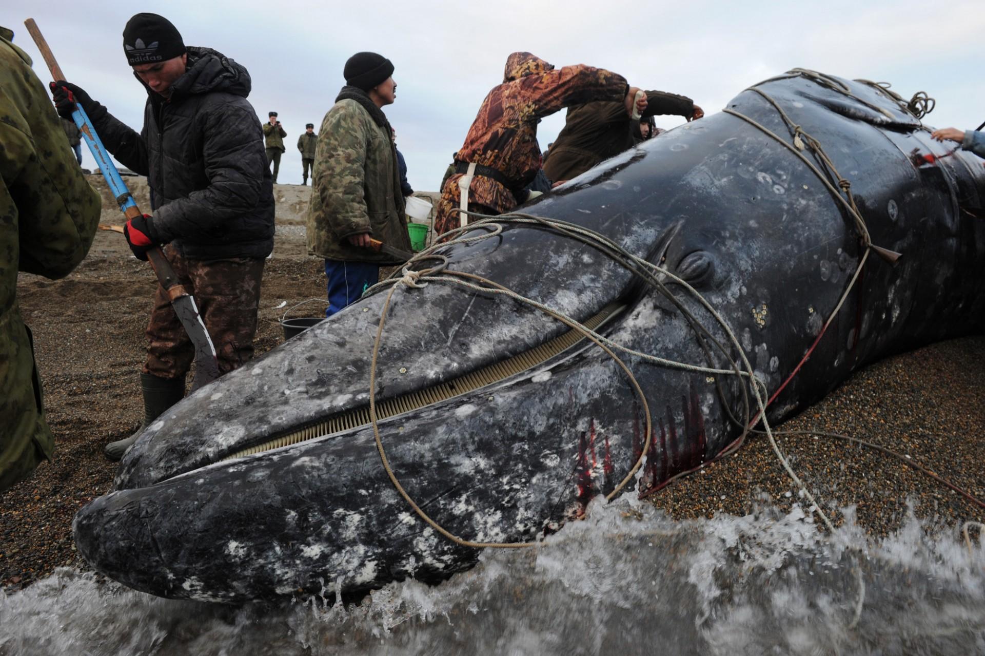 Ловля китов на чукотке